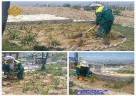 عملیات کاشت گلهای تزیینی در پارک معراج
