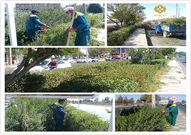عملیات پاکسازی , اصلاح و هرس فضای سبز بلوار فردوسی