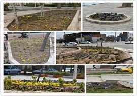 کاشت گل های زیبای زینتی (فصلی) در میادین , بلوارهای و پارکهای سطح شهر خواف